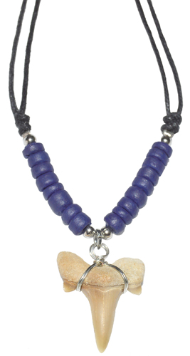 Shark Tooth w/ Blue Beads